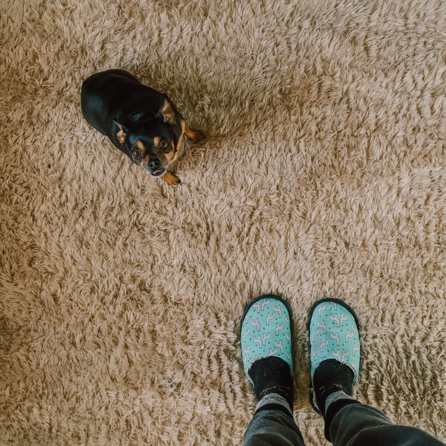 What Causes Brown Stains on Carpet